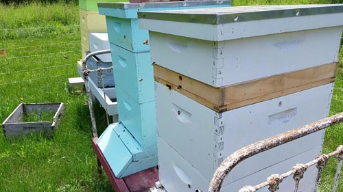 10 frame hives with 2 deeps